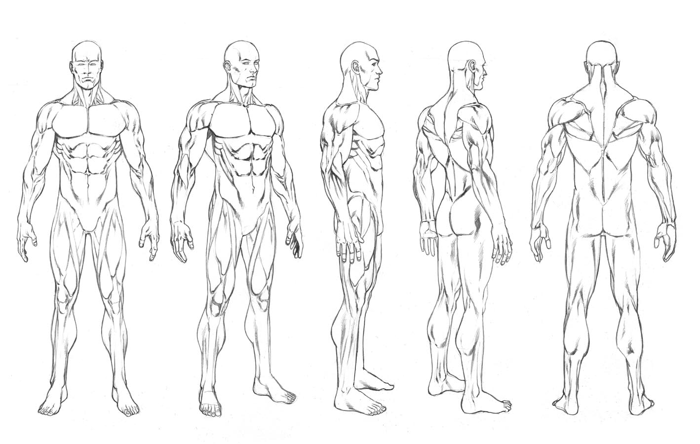 Character Turnarounds and Figure Templates | Robert Atkins Art