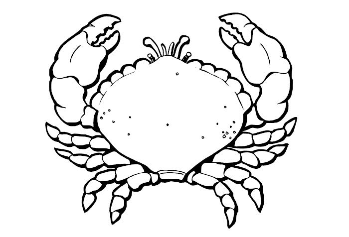 Cartoon Crab Template graphic by Melo Vrijhof | Pixel Scrapper