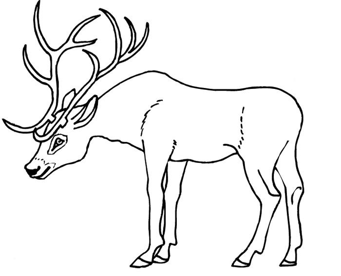 Deer Head Stencil Template | templates | Pinterest | Stencil