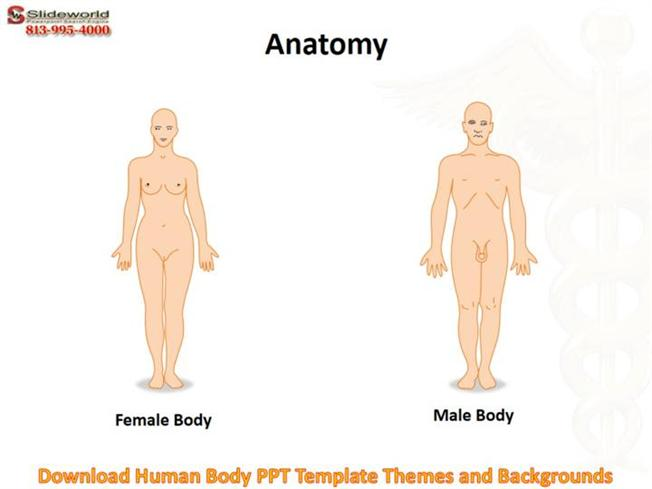 Download Human Body PPT Template Themes And Backgrounds  authorSTREAM