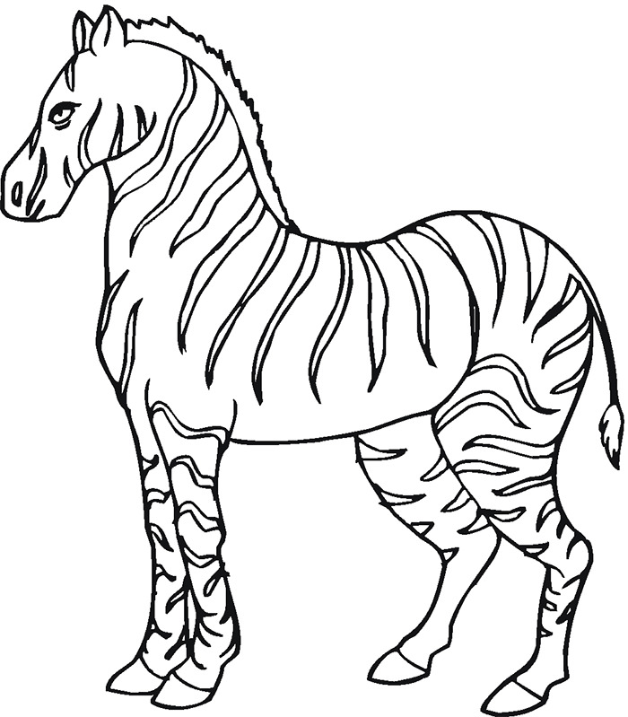 Zebra Template – Clipart